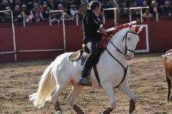 Stier-Fightingpferd Lizenzfreie Stockbilder