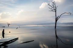 Stier-Insel stockfotos
