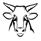 Stier-Kopf Stockfoto