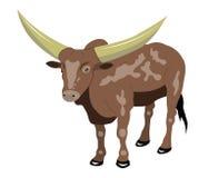 Stier met grote hoornen. Royalty-vrije Stock Afbeelding