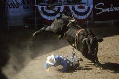 Stier-Reiten, Earl Waren Fairgrounds, Fiesta-Rodeo, Pferdeshow auf Lager, Santa Barbara Old Spanish Days, CA Lizenzfreie Stockfotografie
