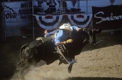 Stier-Reiten, Earl Waren Fairgrounds, Fiesta-Rodeo, Pferdeshow auf Lager, Santa Barbara Old Spanish Days, CA Lizenzfreies Stockfoto