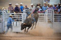 Stier Rider Gets Airborne Royalty-vrije Stock Fotografie