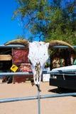 Stier-Schädel mit langen Hörnern auf einem hölzernen Hintergrund stockbilder