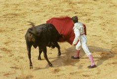 Stieregevecht Royalty-vrije Stock Afbeelding