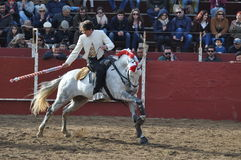 Stierengevechtenpaard Stock Afbeeldingen