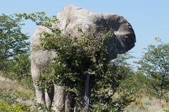 Stierenolifant het krassen op veel kleinere boom in Afrikaans nationaal park stock fotografie