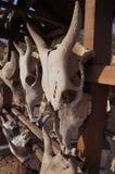 Stierenschedel Stock Afbeelding