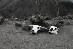 Stierenschedels met hoornen dichtbij de bovenkant van de Merapi-vulkaan Stock Afbeeldingen