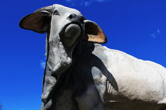 Stierenstandbeeld Stock Foto
