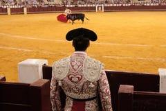 Stierenvechter Stock Afbeeldingen