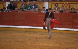 Stierenvechter het lopen royalty-vrije stock foto's