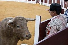 Stierenvechters achter het toevluchtsoord vóór de bedreiging van een moedige stier Royalty-vrije Stock Afbeeldingen