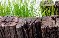 Stiff wood timber and benign grass blade Stock Photography