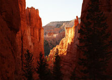 Stiga ned in i Bryce Canyon Arkivbild