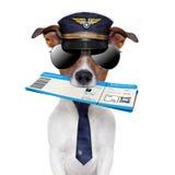 Stiga ombord passerandehund Royaltyfri Foto