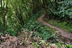 Stigande skoglandskap från de trekking banorna för Azores Faial da Terra Royaltyfria Bilder