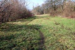 Stigande slinga till och med oklippt gräs som omges med vintervegetation Arkivfoton