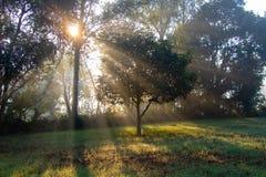 Stigande strålar för sol till och med träden i dimma- och mistmorgon arkivfoton