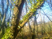 Stigande träd royaltyfri foto