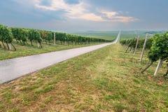 Stigande väg till och med vingårdar på molnig dag Royaltyfria Foton