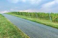 Stigande väg vid vingårdarna Arkivfoton