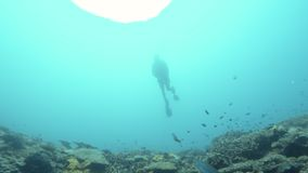 Stigning från en undervattens- sinkhole stock video