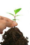 Stijg de boom op Stock Afbeeldingen