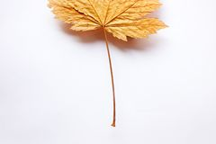 Stijgend blad stock afbeelding