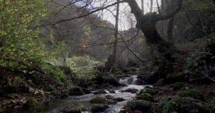 Stijgende beweging van de bodem dichtbij de rivier aan een algemene mening van de cursus van de rivier stock footage