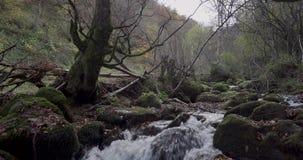 Stijgende beweging van de bodem dichtbij de rivier aan een algemene mening van de cursus van de rivier tussen bomen stock videobeelden