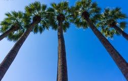 Stijgende mening van Palmen in Nationale Tuin van Athene Griekenland stock afbeelding