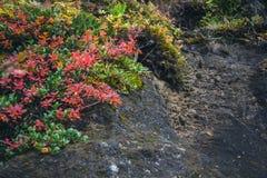Stijging aan de mooie waterval Glymur Royalty-vrije Stock Afbeelding