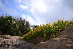 Stijging aan Stella Maris in Haifa in de Lente, Israël - bloemrijke weg en heilige familiekapel bovenop Onderstel Carmel royalty-vrije stock afbeeldingen