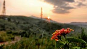 Stijging Bloemen Stock Fotografie