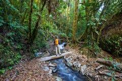 Stijging in Costa Rica Royalty-vrije Stock Foto