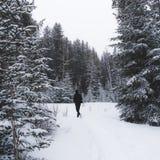 Stijging door bomen in de Canadese winter stock afbeelding