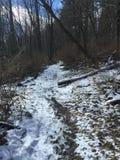 Stijging in het bos stock foto