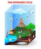 Stikstofcyclus stock illustratie