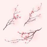 stil för fjäder för målning för blomningCherry orientalisk Arkivbilder