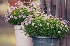 Stil för tappning för lilaväxtblomma Fotografering för Bildbyråer