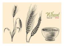Stil för tappning för teckning för hand för vetevektoruppsättning Fotografering för Bildbyråer