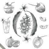 Stil för tappning för teckning för kokosnötsamlingshand stock illustrationer