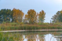 Stil meer in het de herfstbos, onder de herfst royalty-vrije stock fotografie