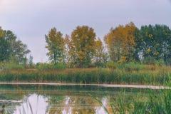 Stil meer in het de herfstbos, onder de herfst stock afbeeldingen