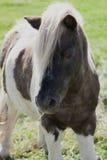 Stil paard Royalty-vrije Stock Fotografie