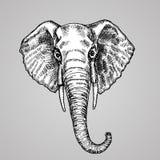 Stile in bianco e nero capo dell'incisione dell'elefante Un bello animale indiano nello stile di schizzo Illustrazione di vettore Fotografia Stock Libera da Diritti