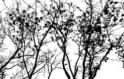 Stile del ritaglio della carta di forma dell'albero Modello per la cartolina d'auguri Fotografie Stock Libere da Diritti