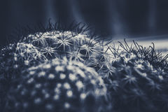 Stile dell'annata del cactus Fotografia Stock Libera da Diritti