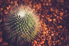 Stile dell'annata del cactus Fotografia Stock